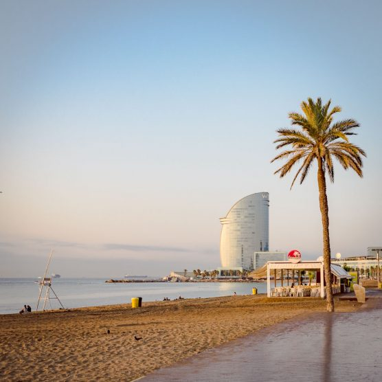 an early morning empty beach with palm tree and w hotel in barcelona spain